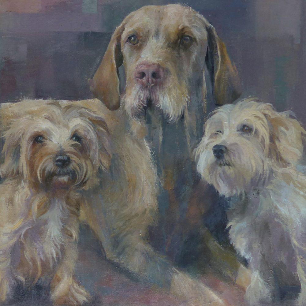 Vizsla Dog Portrait